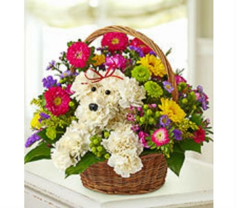 Sweet Pup in a Basket in Asheville NC, Kaylynne's Briar Patch Florist, LLC