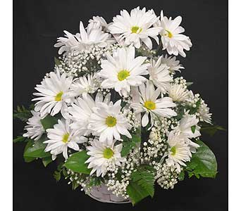 Daisy Basket White in Port St Lucie FL, Flowers By Susan