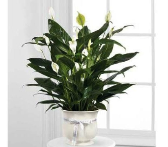 The FTD� Comfort Planter in Southfield MI, Thrifty Florist