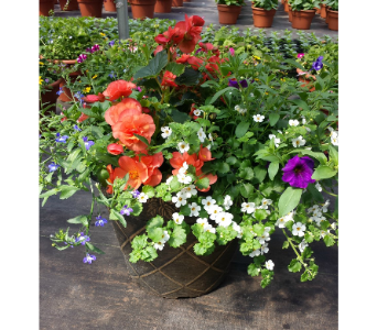 17inch Premium Patio Pot in Westland MI, Westland Florist & Greenhouse