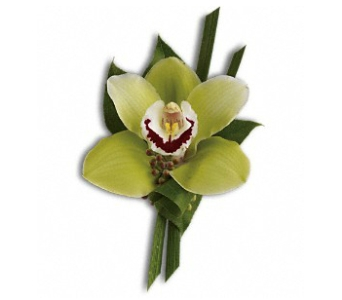 Green Orchid Boutonniere in Fairfield CT, Glen Terrace Flowers and Gifts