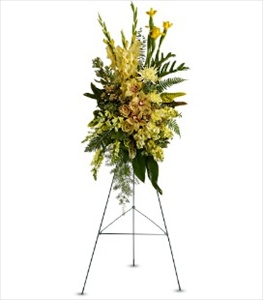 Sunshine Spray in Clearwater FL, Hassell Florist