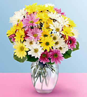 CHEERFUL DAISY BOUQUET in Vienna VA, Vienna Florist & Gifts