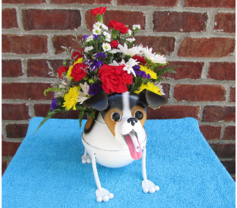 MINI JACK RUSSELL WATERING CAN-local delivery only in Circleville OH, Wagner's Flowers