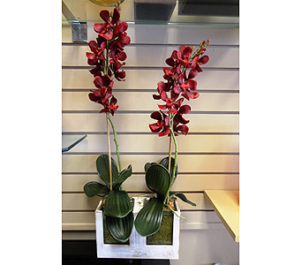 Faux Orchid Duo in Tampa FL, Buds, Blooms & Beyond