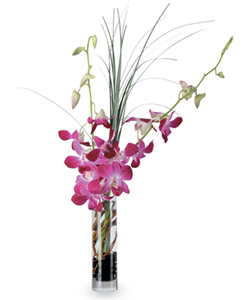 Blooming Orchid Vase by Hoogasian Flowers in San Francisco CA, Hoogasian Flowers