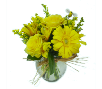 Lemon Drop in Nashville TN, Emma's Flowers & Gifts, Inc.