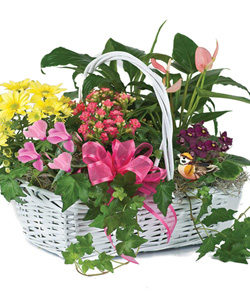 Blooming Garden Basket by Hoogasian Flowers in San Francisco CA, Hoogasian Flowers
