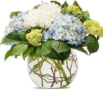 Mighty Hydrangea in Holladay UT, Brown Floral