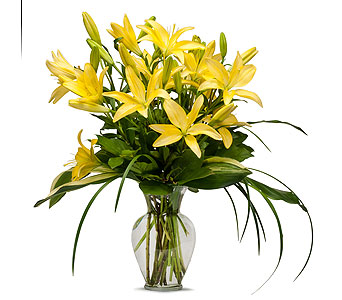 Lily in Traverse City MI, Teboe Florist