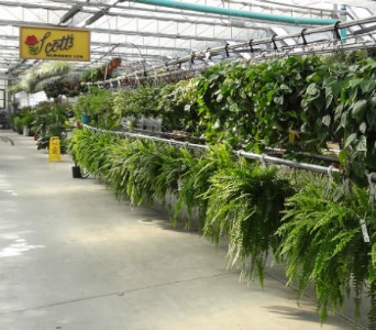 Inside Our Nursery in Lincoln NB, Scott's Nursery, Ltd.