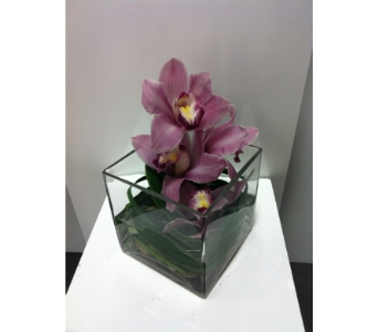 Orchid Love in Thornhill ON, Orchid Florist