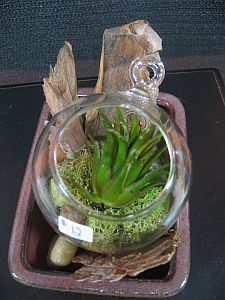 Terrarium Garden 1 in Guelph ON, Patti's Flower Boutique