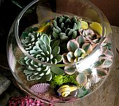 Terrarium Garden 7 in Guelph ON, Patti's Flower Boutique