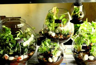 Terrarium Garden 7 Florist Choice in Guelph ON, Patti's Flower Boutique