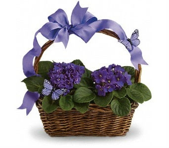 Violets In Bloom in Traverse City MI, Teboe Florist