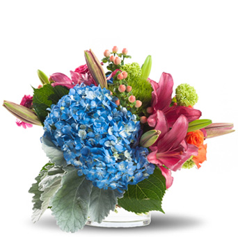 Hydrangea Elegance in Oklahoma City OK, Capitol Hill Florist and Gifts