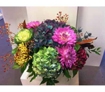 Vibrant & Rich in Thornhill ON, Orchid Florist
