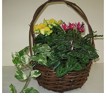 Plant Basket with Seasonal Plants in Blue Bell PA, Country Flower Shoppe