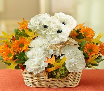 Fall A-Dog-Able in Wichita KS, The Flower Factory, Inc.