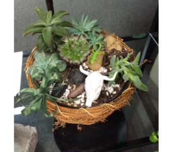 Dry Bones Succulent Garden in Muskogee OK, Cagle's Flowers & Gifts