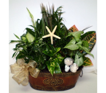 Winter at the Seashore in Falmouth MA, Falmouth Florist 508-540-2020