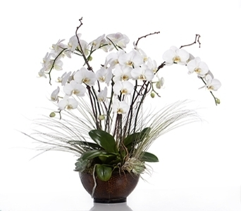 Orchid with Air Plants in Little Rock AR, Tipton & Hurst, Inc.