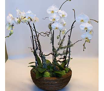 Glamourous Orchids in Victoria BC, Fine Floral Designs