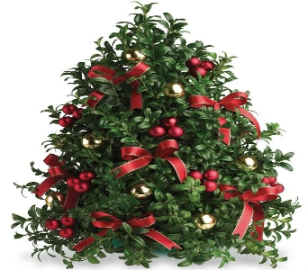 Deck The Halls Boxwood Tree in Big Rapids MI, Patterson's Flowers, Inc.