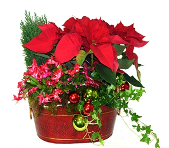 Red Holiday European Garden Basket in Little Rock AR, Tipton & Hurst, Inc.