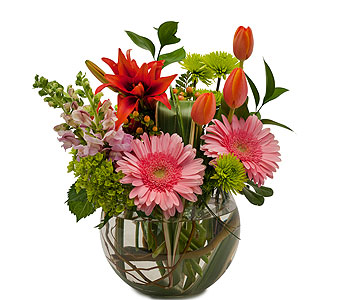 Splendor Surprise in Schaumburg IL, Deptula Florist & Gifts