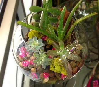 SUCCULENT TERRARIUM - LARGE in Arlington VA, Twin Towers Florist