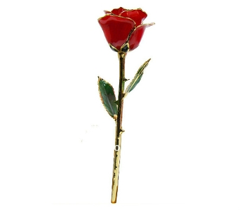 24K Red Rose in Waterbury CT, The Orchid Florist