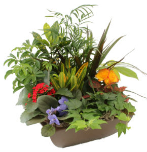 Garden Retreat Planter in Ceramic  in Grimsby ON, Cole's Florist Inc.