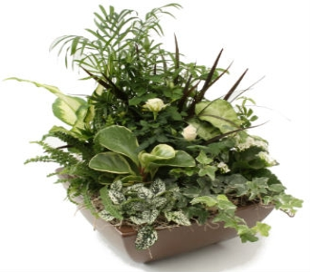 White Serenade Planter in Grimsby ON, Cole's Florist Inc.