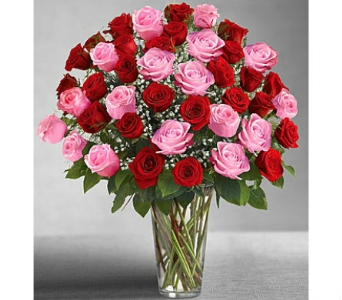 Ultimate Elegance� Long Stem Pink & Red Roses in Watertown CT, Agnew Florist