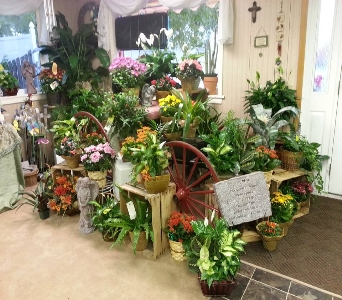 buggy plants in Crown Point IN, Debbie's Designs