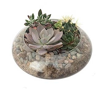 Succulent In Lotus Bowl in Deerfield IL, Swansons Blossom Shop