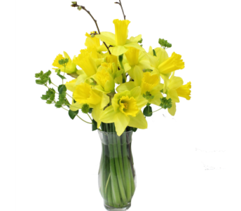 Spring Flash Sale in Silver Spring MD, Bell Flowers, Inc