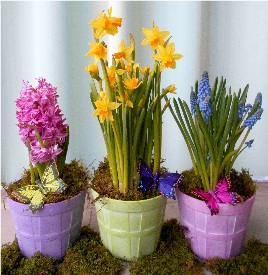 Spring Bulb Trio in Kennett Square PA, Barber's Florist Of Kennett Square