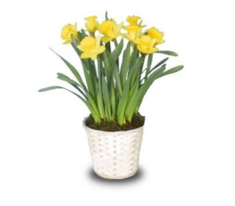 Daffodils From the Heart in Norwalk CT, Bruce's Flowers & Greenhouses