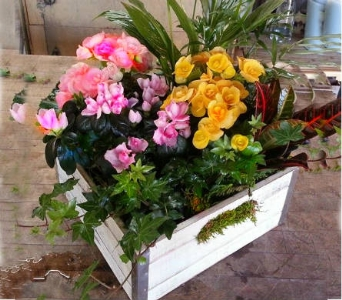 Live plants in Vintage wooden box in Orinda CA, Misaghi Design Orinda Florist