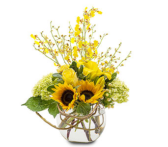 Orchid  Rays in Wellington FL, Wellington Florist