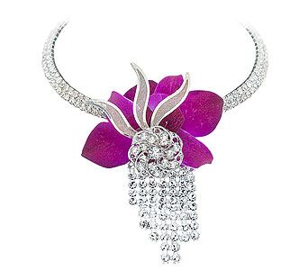 Orchid Gem in Pleasanton CA, Bloomies On Main LLC