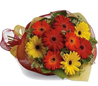 Mixed Gerbera Bouquet in Parry Sound ON, Obdam's Flowers
