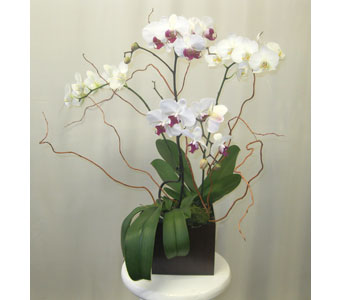 Two Double Orchid Plants in 6x6 Bamboo Planter in Wyoming MI, Wyoming Stuyvesant Floral