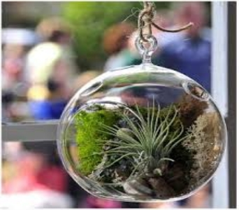 Air Plant Terrarium Garden IV in Guelph ON, Patti's Flower Boutique