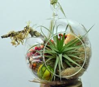 Air Plant Terrarium Garden V in Guelph ON, Patti's Flower Boutique