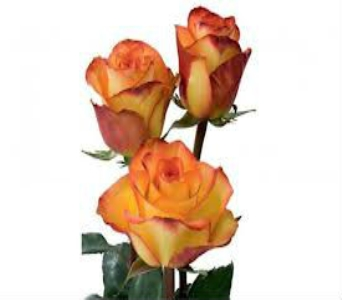 Orange Rose in Nashville TN, Emma's Flowers & Gifts, Inc.