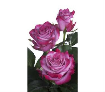Purple Rose in Nashville TN, Emma's Flowers & Gifts, Inc.
